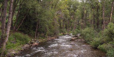 Fly Fishing on the Roaring Fork River